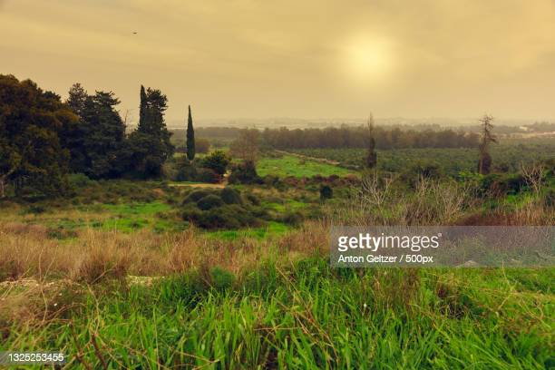scenic view of field against sky during sunset,netanya,center district,israel - netanya stock pictures, royalty-free photos & images