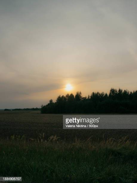 scenic view of field against sky during sunset,russia - nikitina stock pictures, royalty-free photos & images