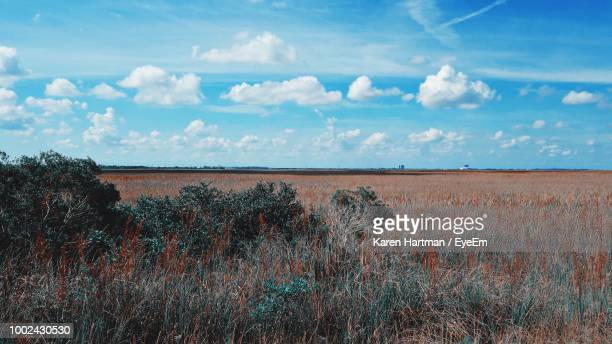 scenic view of field against sky - coral springs stock pictures, royalty-free photos & images