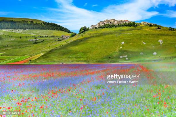 scenic view of field against sky - umbria stock pictures, royalty-free photos & images