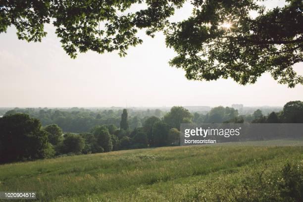 scenic view of field against sky - bortes stock-fotos und bilder