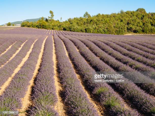 scenic view of field against sky - marek stefunko stock photos and pictures