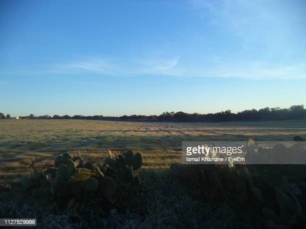 scenic view of field against sky - ismail khairdine stock photos and pictures