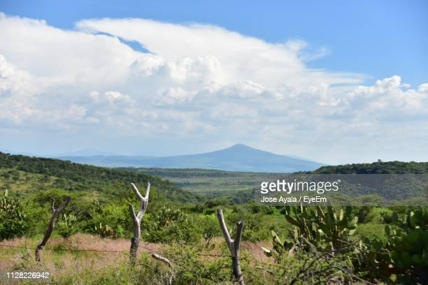 scenic view of field against sky - jose ayala stock pictures, royalty-free photos & images