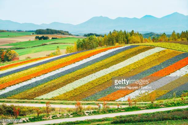 scenic view of field against sky - biei town stock pictures, royalty-free photos & images