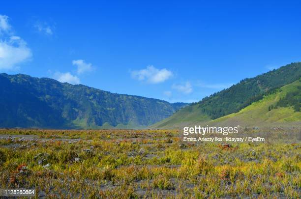 scenic view of field against sky - east java province stock pictures, royalty-free photos & images