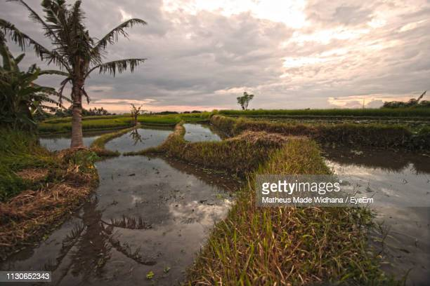 scenic view of field against sky - made widhana stock photos and pictures