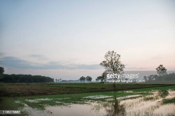 scenic view of field against sky - pattanasit stock pictures, royalty-free photos & images