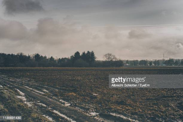 scenic view of field against sky - albrecht schlotter stock photos and pictures