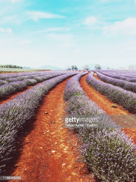 scenic view of field against sky - launceston australia stock pictures, royalty-free photos & images