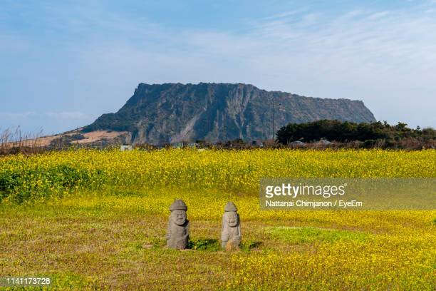 scenic view of field against sky - jeju - fotografias e filmes do acervo