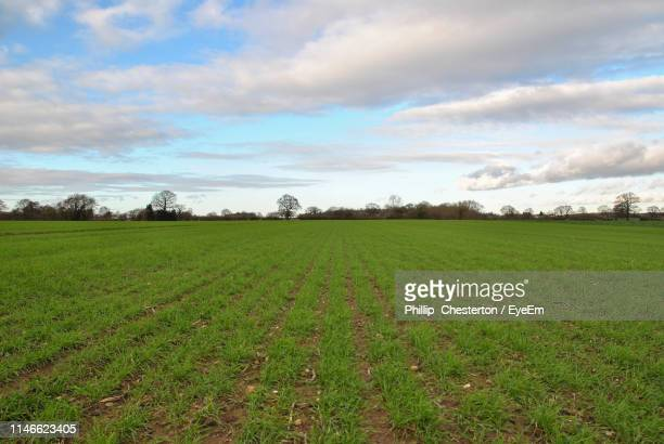 scenic view of field against sky - chesterton stock photos and pictures