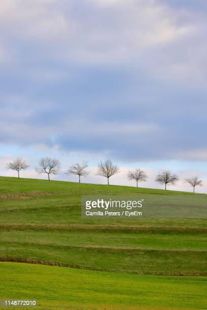 scenic view of field against sky - bare tree stock pictures, royalty-free photos & images