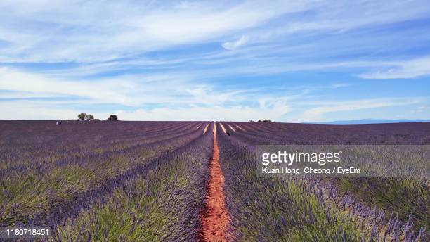 scenic view of field against sky - bouches du rhone stock pictures, royalty-free photos & images