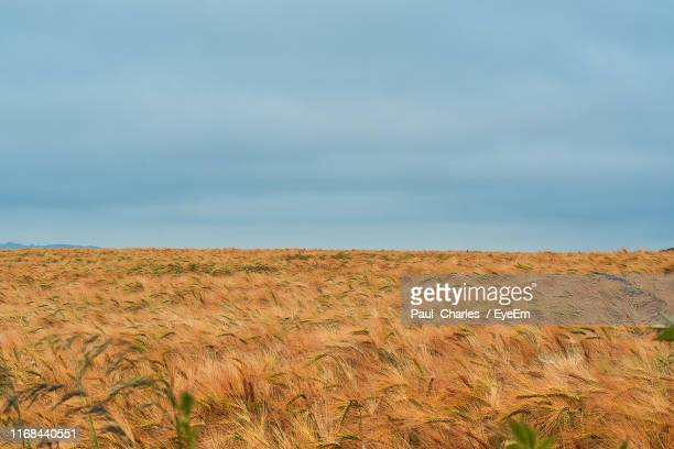 scenic view of field against sky - cardiff galles foto e immagini stock