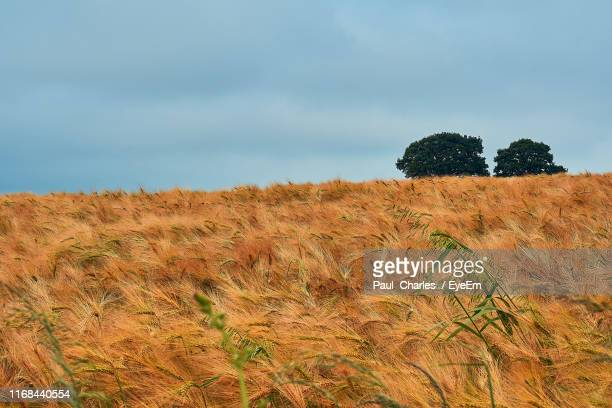 scenic view of field against sky - south wales stock pictures, royalty-free photos & images