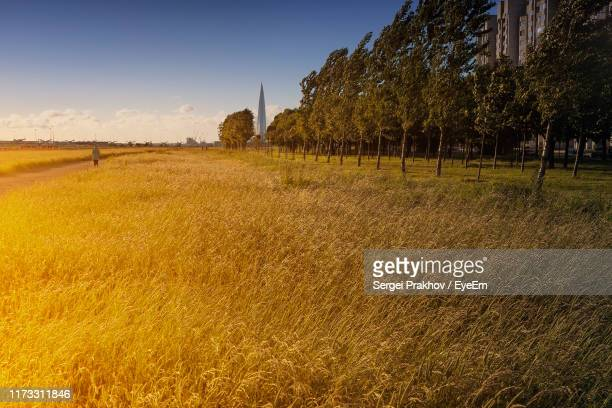 scenic view of field against sky - sergei stock pictures, royalty-free photos & images