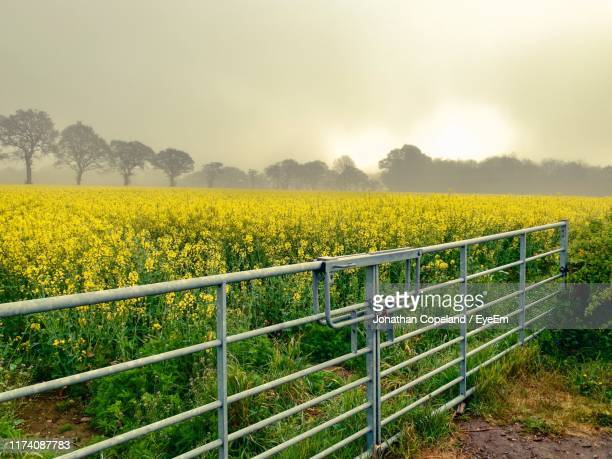 scenic view of field against sky - agriculture stock pictures, royalty-free photos & images