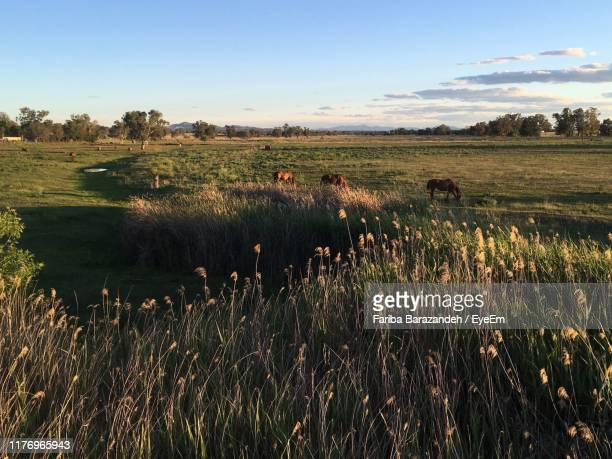 scenic view of field against sky - tamworth australia stock pictures, royalty-free photos & images