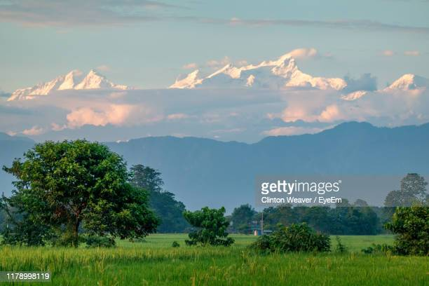 scenic view of field against sky - chitwan stock pictures, royalty-free photos & images