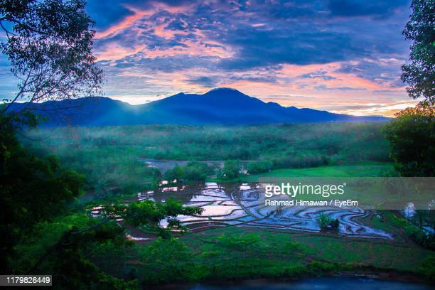scenic view of field against sky - rahmad himawan stock photos and pictures