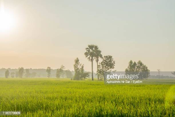 scenic view of field against sky - thai mueang photos et images de collection
