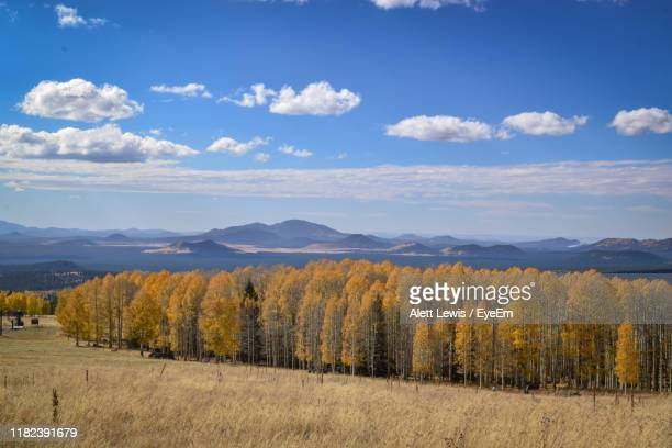 scenic view of field against sky - flagstaff arizona stock pictures, royalty-free photos & images