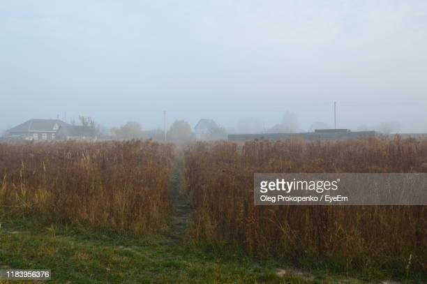 scenic view of field against sky - oleg prokopenko stock pictures, royalty-free photos & images