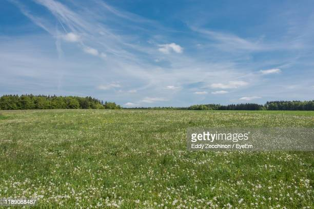 scenic view of field against sky - flowering plant stock pictures, royalty-free photos & images