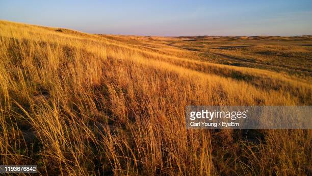 scenic view of field against sky - prairie stock pictures, royalty-free photos & images