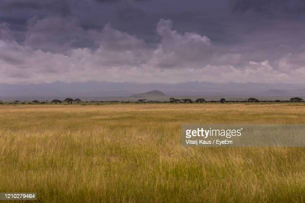 scenic view of field against sky - semi arid stock pictures, royalty-free photos & images