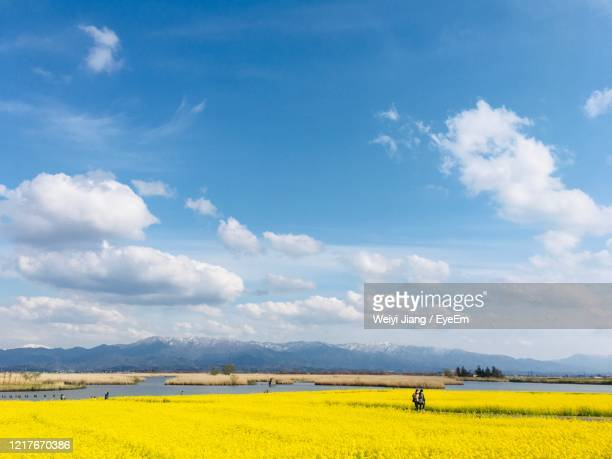 scenic view of field against sky - 新潟県 ストックフォトと画像
