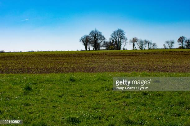 scenic view of field against sky - ポワティエ ストックフォトと画像