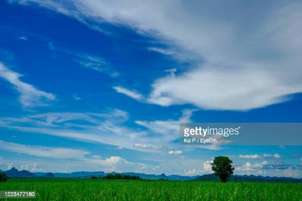 scenic view of field against sky - apple tree stock pictures, royalty-free photos & images