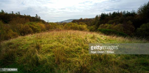 scenic view of field against sky - nigel owen stock pictures, royalty-free photos & images