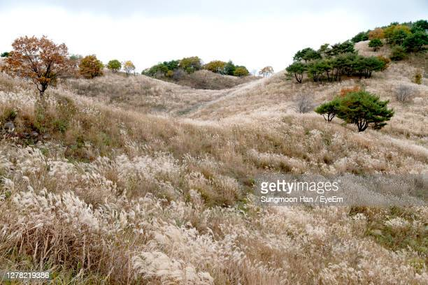 scenic view of field against sky - gangwon province stock pictures, royalty-free photos & images