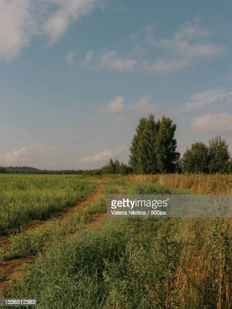 scenic view of field against sky - nikitina stock pictures, royalty-free photos & images