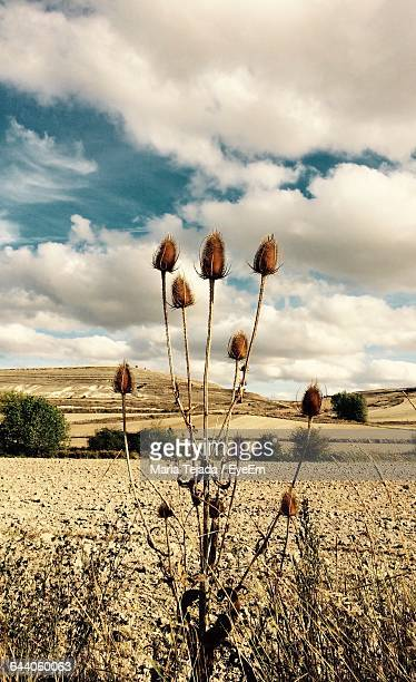 scenic view of field against sky - maria tejada stock pictures, royalty-free photos & images