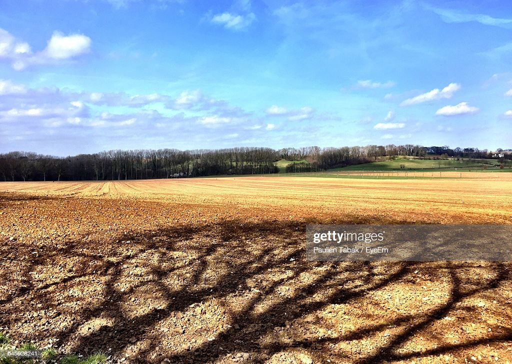 Scenic View Of Field Against Sky : Foto stock