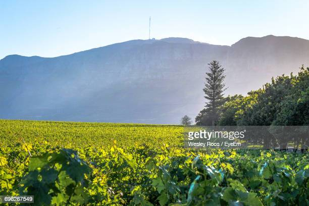 scenic view of field against sky - constantia stock pictures, royalty-free photos & images