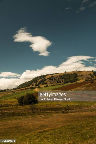 scenic view of field against sky - carvajal stock photos and pictures