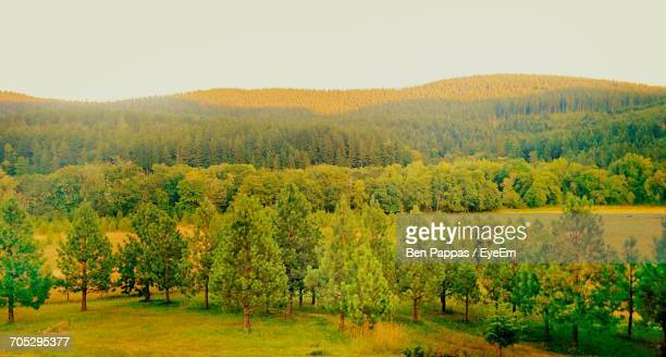 scenic view of field against sky - corvallis stock pictures, royalty-free photos & images