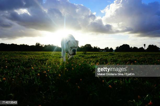 scenic view of field against sky - mabel ray stock photos and pictures