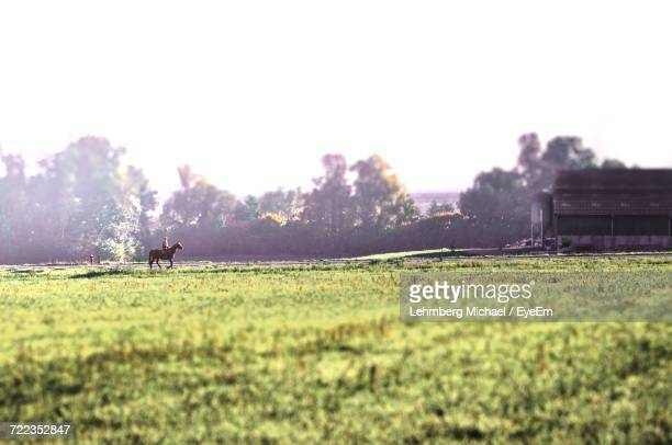 scenic view of field against sky - michael stock photos and pictures