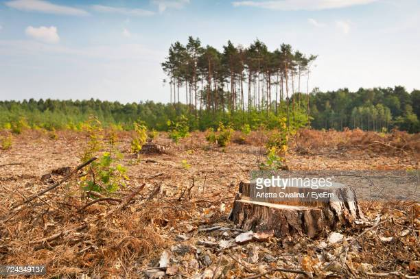 scenic view of field against sky - deforestation stock pictures, royalty-free photos & images
