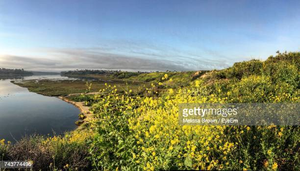 scenic view of field against sky - costa mesa stock photos and pictures
