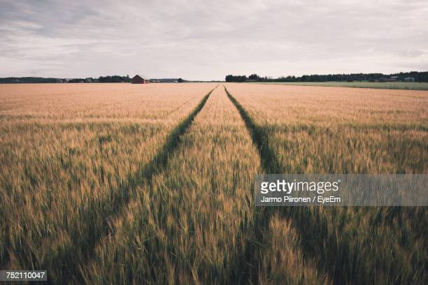 scenic view of field against sky - rye stock photos and pictures