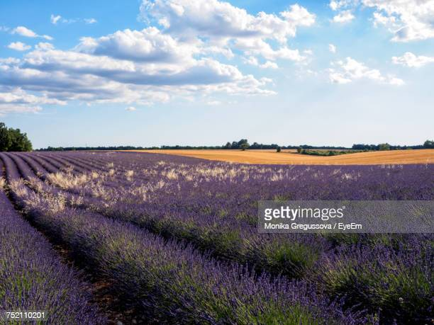 scenic view of field against sky - monika gregussova stock pictures, royalty-free photos & images