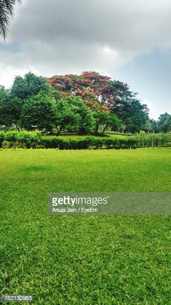 scenic view of field against sky - jain stock photos and pictures