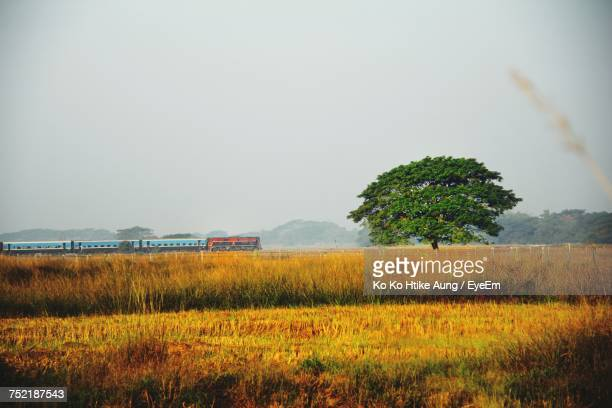 scenic view of field against sky - ko ko htike aung stock pictures, royalty-free photos & images